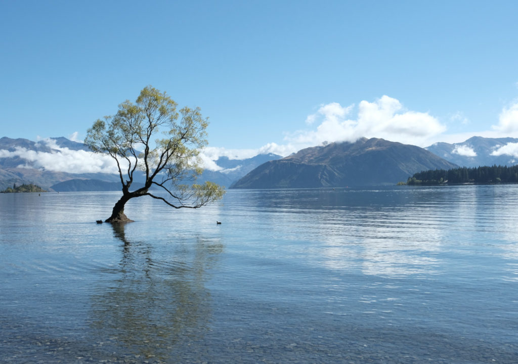 Wanaka lake and tree