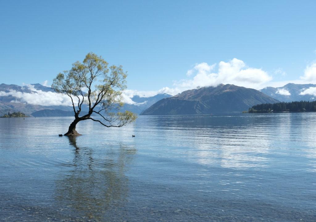 Wanaka lake and tree